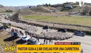 ¡Paren todo! Pastor guía a 2 mil 500 ovejas por una carretera en EEUU