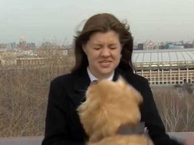 Curioso perro arrebata micrófono a periodista en plena transmisión en vivo