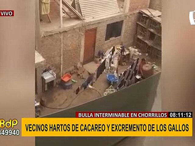 Chorrillos: denuncian vivienda donde criarían alrededor de 100 gallos de pelea