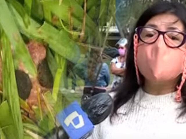 San Borja: vecinos denuncian que dejan veneno en parque y dos mascotas murieron
