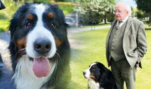 Mascota del presidente de Irlanda se roba la atención en conferencia