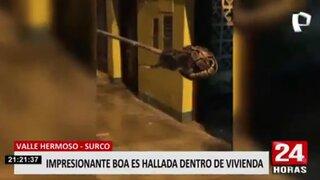 Surco: Policía y serenos del distrito intervienen boa dentro de una vivienda