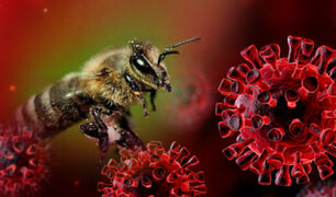 Entrenan abejas para detectar el COVID-19 en cuestión de segundos