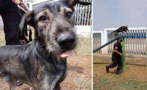 Bryan Coco: de ser un perro abandonado con garrapatas a formar parte de la Brigada Canina