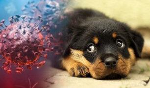 India: veterinarios cuidan a mascotas de pacientes graves