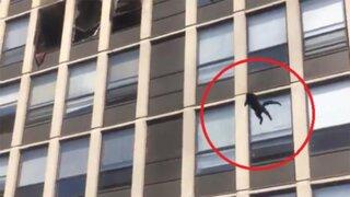 VIDEO: gato salta del quinto piso de un edificio en llamas