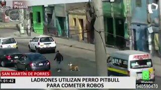 SMP: ¿para qué utilizan los delincuentes a un pitbull en sus robos?