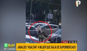 """Jabalíes """"asaltan"""" a mujer: le quitaron bolsa con alimentos cuando salía de supermercado"""