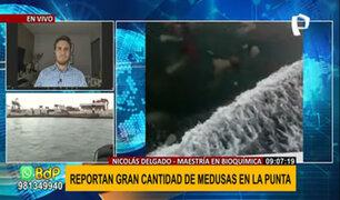 """Experto sobre medusas en La Punta: """"es normal encontrarlas en gran cantidad por estos meses"""""""