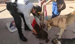 Policías y bomberos rescataron a perrito que cayó a buzón en Cusco