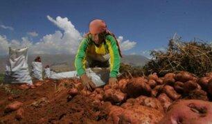 Conozca qué variedad de papa peruana podría ser cultivada por futuros colonos en Marte