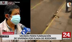 Chorrillos: vecinos reportan que son afectados por gran cantidad de ratas