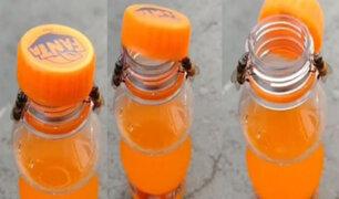 ¡Asombroso! Dos abejas trabajan sincronizadamente para destapar una botella