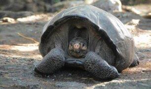 Ecuador: descubren especie de tortuga que se creía extinta