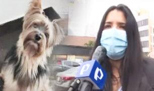 Se roban a su perro y le piden dinero para devolvérselo
