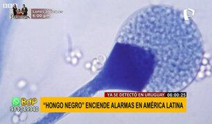 """""""Hongo Negro"""" en Uruguay enciende las alarmas en América Latina"""