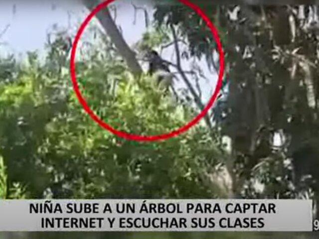 Piura: niña se sube a un árbol para captar señal de Internet y escuchar sus clases virtuales
