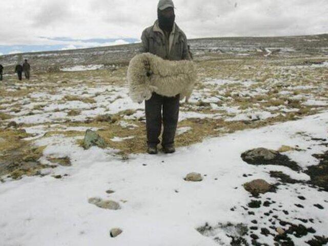Decenas de alpacas y ovinos han muerto a causa de las heladas en Pasco