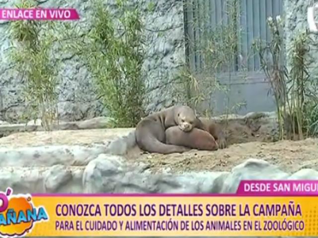 'Sé mi AmigaZoo': ¿Cómo puedes apadrinar a un animalito del Parque de las Leyendas?