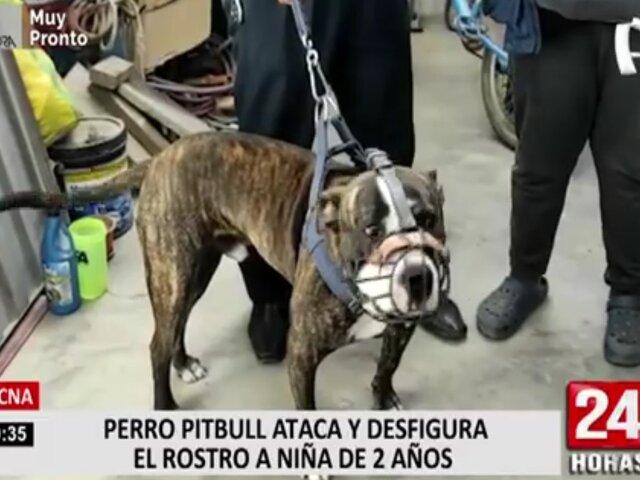 Tacna: perro pitbull ataca a niña de 2 años y familia pide que sea trasladada a Lima