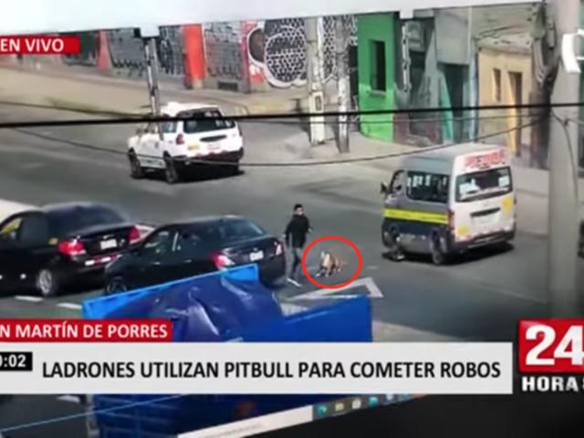 Delincuentes utilizan pitbull para cometer robos en SMP