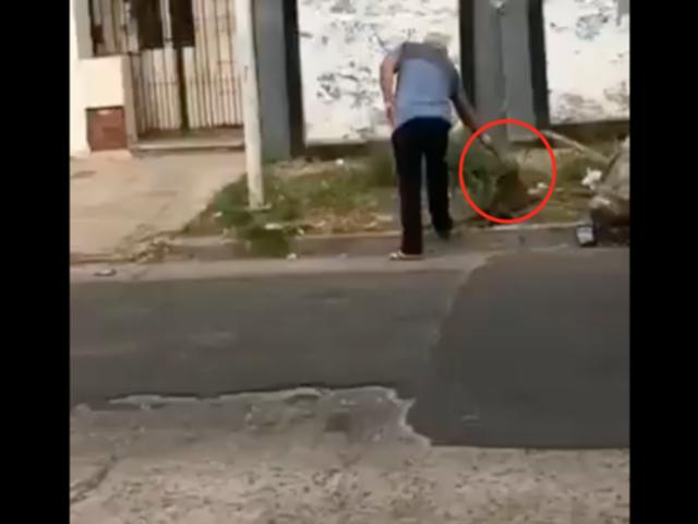 Indignación en Argentina: hombre dispara y mata a perro que estaba recostado en la calle