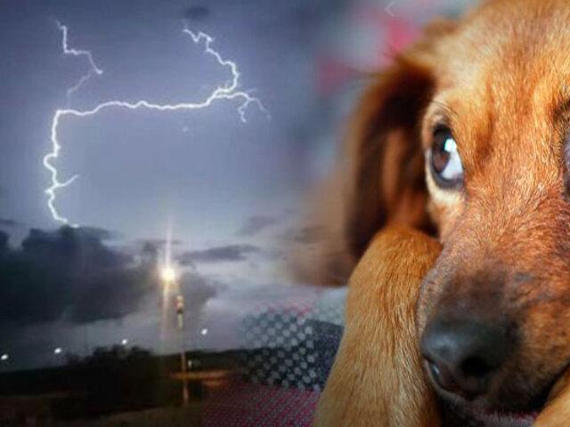 ¿Los animales pueden predecir fenómenos naturales?