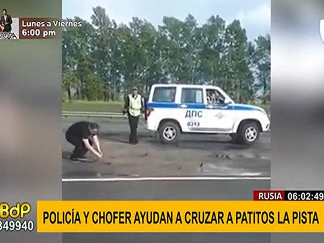 Noble acción: detienen tránsito para ayudar a cruzar a patitos por peligrosa vía