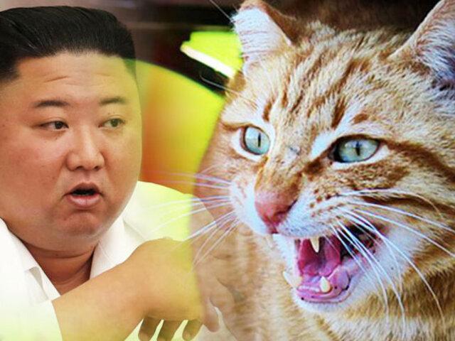 Kim Jong-un ordena eliminar gatos y palomas para evitar contagios de COVID-19