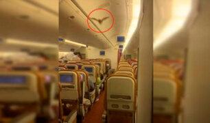 ¡Terror a bordo! Murciélago desata pánico en avión y obliga a un aterrizaje de emergencia