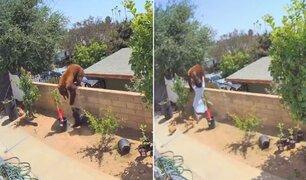Mujer se enfrenta a oso para salvar a sus mascotas