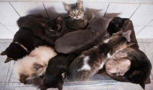 Hallan cadáver de anciana que fue devorado por sus gatos en Madrid