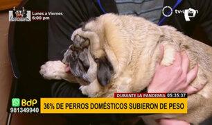 El 36% de perros domésticos subió de peso durante pandemia, según estudio