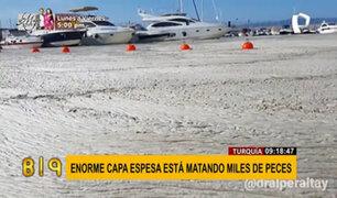 """Turquía: espesa capa de """"moco marino"""" está causando la muerte de miles de peces"""