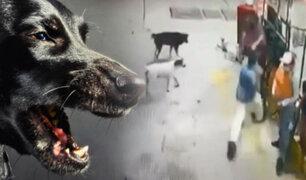 Vecinos y perros impiden asalto a grifo