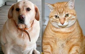 Crecen casos de obesidad en mascotas durante la pandemia