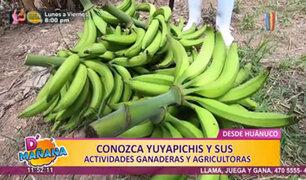D'Mañana desde Huánuco: conozca a Yuyapichis y sus actividades ganaderas y agrícolas
