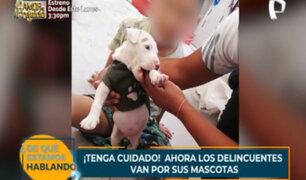¡Tenga cuidado! Delincuentes roban mascotas en las calles de Lima
