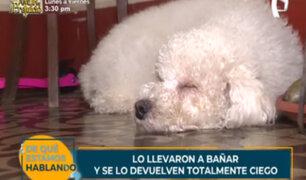 Llevan a su cachorro para un baño en la veterinaria y se lo devuelven totalmente ciego