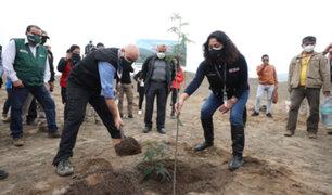 Ancón: plantan primeros árboles de la Franja Verde en la nueva Ciudad Bicentenario
