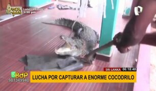 ¡Terrorífico hallazgo! Niña encuentra cocodrilo de casi tres metros en la puerta de su casa