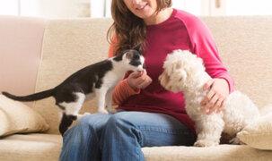 Congreso aprobó ley que prioriza esterilización de perros y gatos