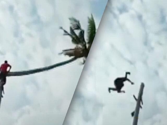 Hombre es catapultado al cortar la copa de una gigantesca palmera inclinada