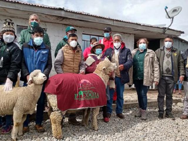 Pasco: Entregan kits veterinarios para proteger 118 mil cabezas de ganado ante heladas
