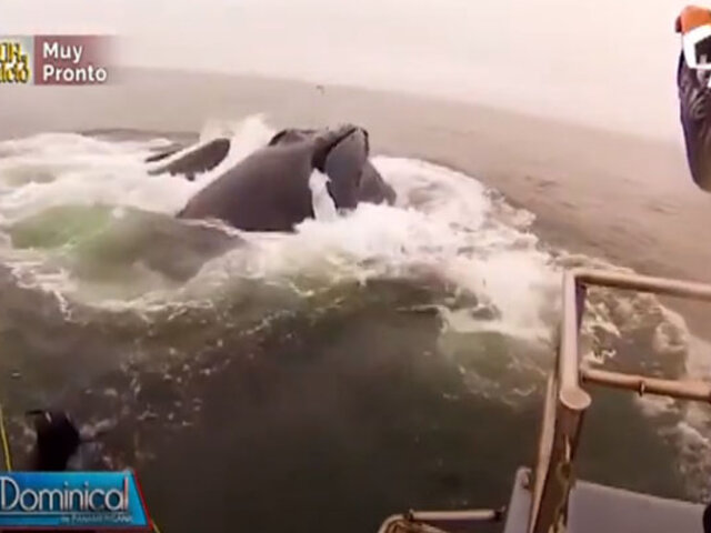 Increíble historia de pescador: ballena se lo traga y vive para contarlo