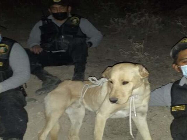 Serenos y policías rescatan a perrito callejero que cayó a quebrada en Arequipa