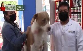 Pucallpa: perro pitbull es baleado por delincuentes tras defender a su dueño de un asalto