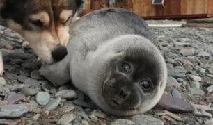 Familia rescata y adopta a pequeña foca: perro se convierte en su fiel compañero