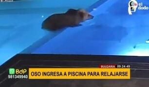 Viral: oso aprovecha piscina cerrada por invierno para relajarse y nadar