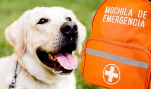 D'Mañana: sepa cómo preparar una mochila de emergencias para mascotas